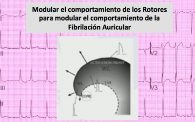 Ablation of Rotor Domains Effectively Modulates Dynamics of Human Long-Standing Persistent Atrial Fibrillation